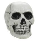 Schädel und Skelette